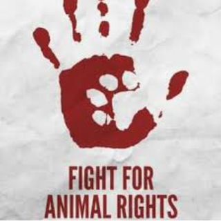 do animals have rights and are the animal rights activists going too far?