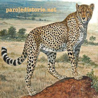 Il leopardo e il monaco. Una favola dall'Africa