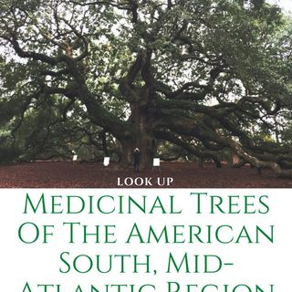 Show 35:  Medicinal Trees, and My New Book!
