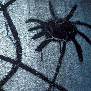 Spinnennetz im Stacheldraht - Im Bann rechtsextremer Gedanken