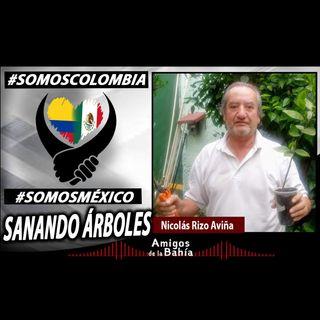 24. UNIDOS HACIENDO COMUNIDAD| Sanando Árboles