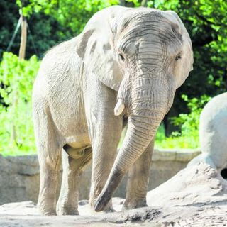 The ban on Zoos