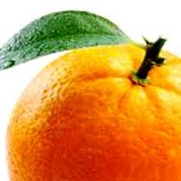 The Orange Show November 2014