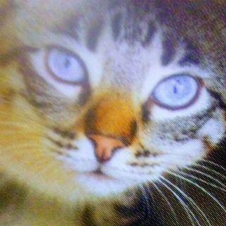 Pt.2 Mr. Lively Spicy Camera Joy Michael