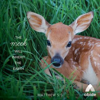 Beatitudes: Blessed Are the Meek