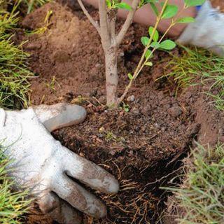Autoridades capitalinas llaman a la ciudadanía a sembrar 10 millones de árboles