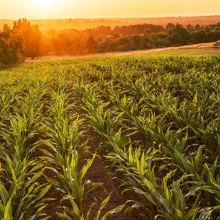 A pesar de la crisis sanitaria, el campo no se detiene, informa la Secretaria de Agricultura