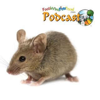Bloody Mice! - Our Story! - Brian & Kaye