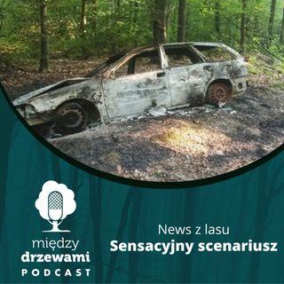 News z lasu - Sensacyjny scenariusz [Opowiada Michał Wieciech]