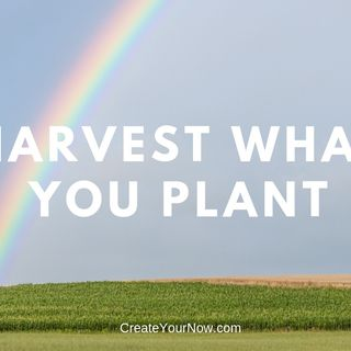 1375 Harvest What You Plant