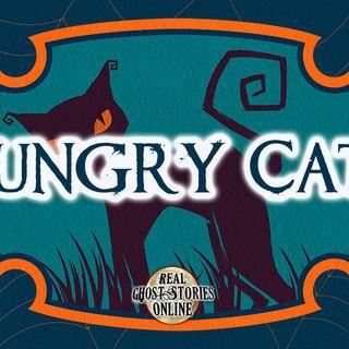 Hungry Cats | Haunted, Paranormal, Supernatural