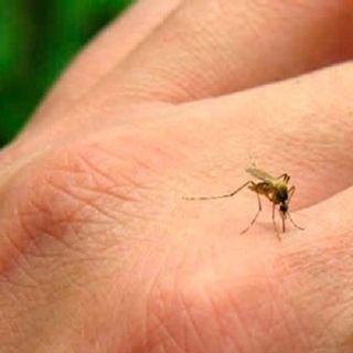Dengue trasmisión y prevención