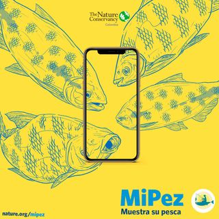 MiPez: la APP de ciencia ciudadana que visibiliza la pesca (FB LIVE)