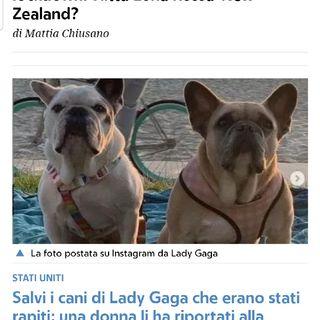 Episodio 79 - ritrovati i due cani rapiti di lady gaga dopo che lei aveva offerto 500 mila dollari di ricompensa...