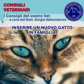 17- Se arriva un nuovo gatto? 7 Consigli su come inserire un nuovo gatto in famiglia