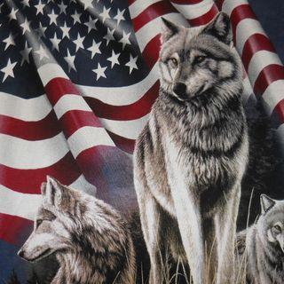 America, indecency, hatred, ANTIFA AKA DOMESTIC TERRORISTS, and gun control!