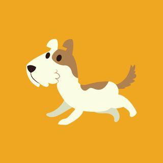Episodio 11: Il benessere dei nostri amici cani