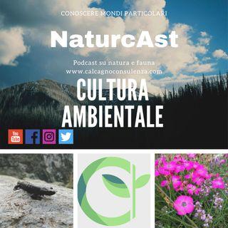 Cultura ambientale