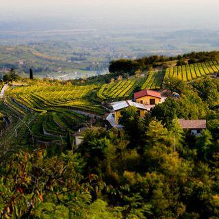 Ep 317: Valpolicella and Amarone from Veneto, Italy with Filippo Bartolotta