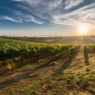 """Nel """"Fit for 55"""" della UE suolo e agricoltura saranno decisivi"""