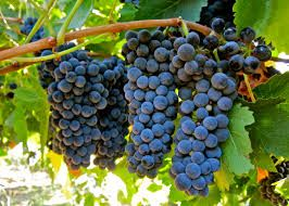 Ep 215: The Grape Miniseries - Syrah