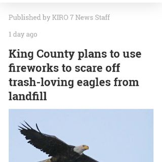 King County To Scare Eagles With Fireworks 🤯🦅💣