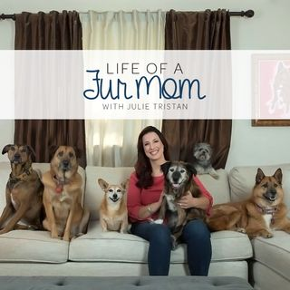 Animal Lawyer Ledy VanKavage from Best Friends Animal Society Fights for Pit-Bulls & more!