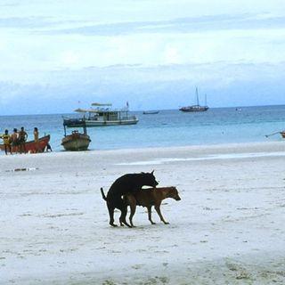 Praia está muito longe das minhas prioridades - Ep. 15