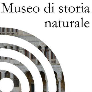 Al Museo di storia naturale con Suzana Blesic