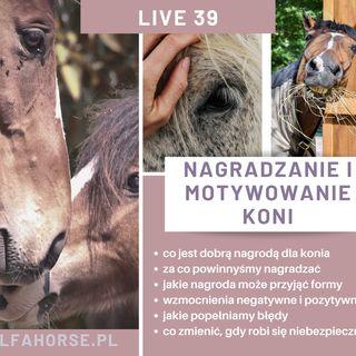 Live 39: Nagradzanie i motywowanie w treningu koni