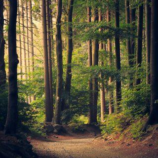 Foresta terapia: scoprire noi stessi attraverso il bosco per affrontare meglio la malattia