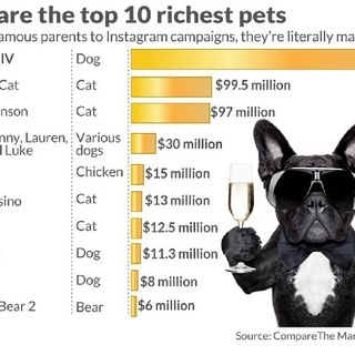 #SITTNEWZ-THE WORLDS RICHEST PETS
