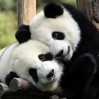 The Panda Cast - EP7 - AfterTheStorm