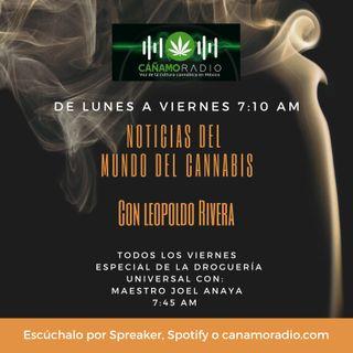 Noticias del mundo del Cannabis La drogueria Universal 18 Dic 2020