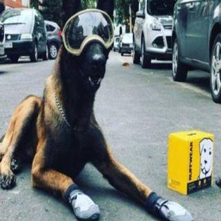 Muere el perro rescatista Chichi