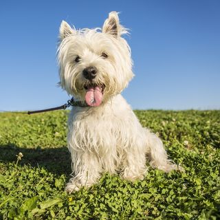What Plants Do You Need To Protect Your Pets From?