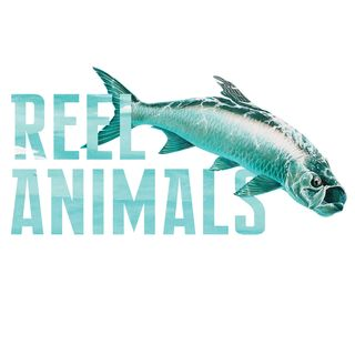 Reel Animals 4-20-19  Hour 2