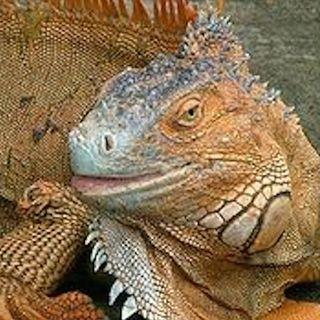 Dino Buzzati: L'uccisione del drago