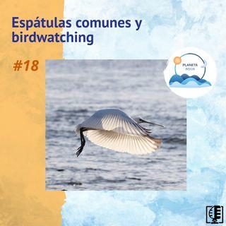 Espátulas comunes y birdwatching | Planeta Agua #18