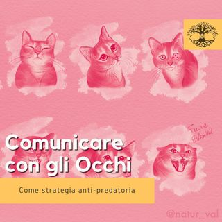 Comunicare con lo Sguardo #2 (Rubrica Etologica) - Comportamento Animale