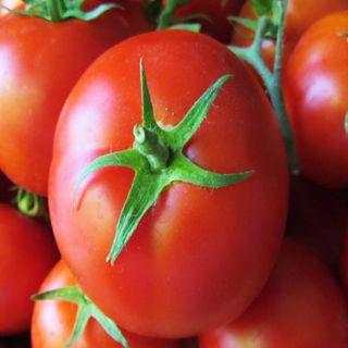 Aumento de aranceles contra tomateros mexicanos