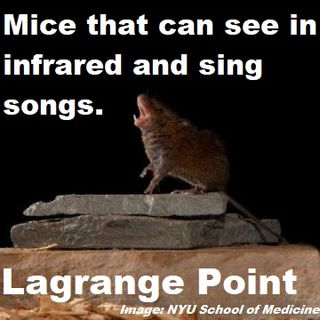 Episode 316 - Mice that sing and see in infrared, balancing predators and 2019MMM Preview