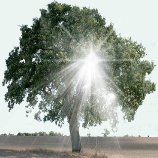 Det rodløse Træ og Max Muldjord