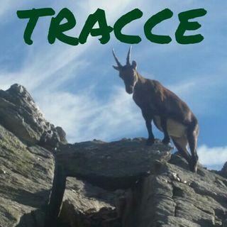 Tracce 06