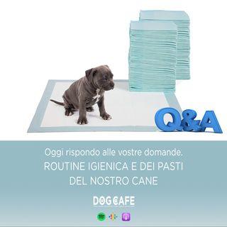 #063 - Q&a routine igienica e routine pasti