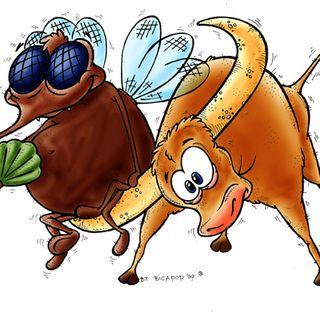 Il toro e la zanzara