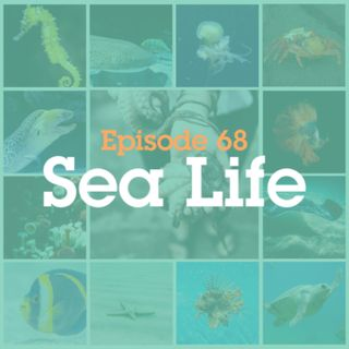 Episode 68: Sea Life