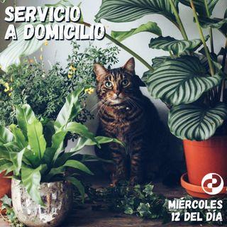 Servicio a domicilio 80