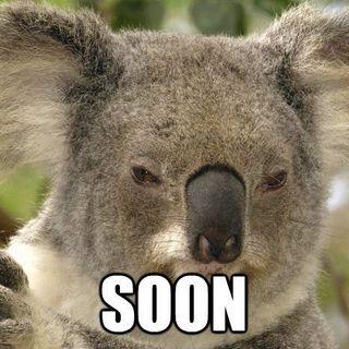 15 - I Koala 2: Perché sono teneri ma incredibilmente stupidi (come certa gente)