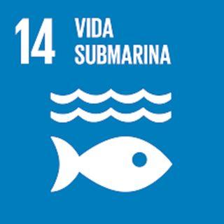 14. Vida submarina
